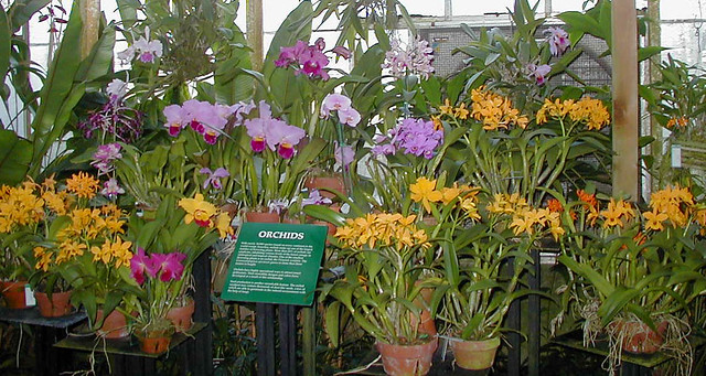 Tour Orchids In Walla Walla Wa