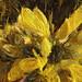 Scottish Wildflower