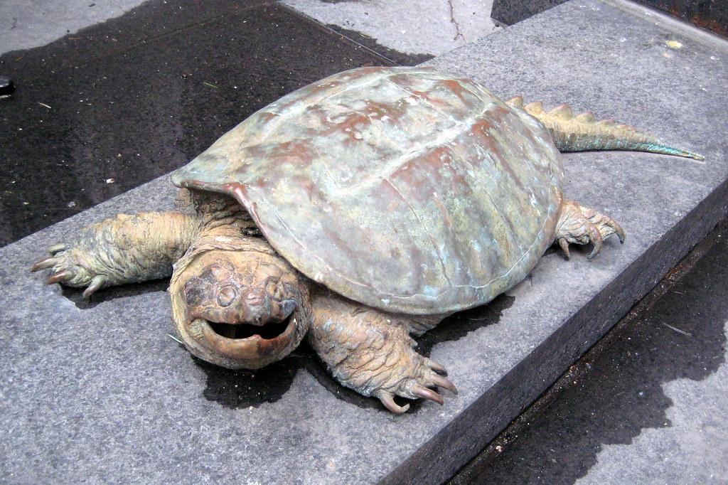 new york turtle