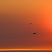 helicopters fly through smokey fiery sunset