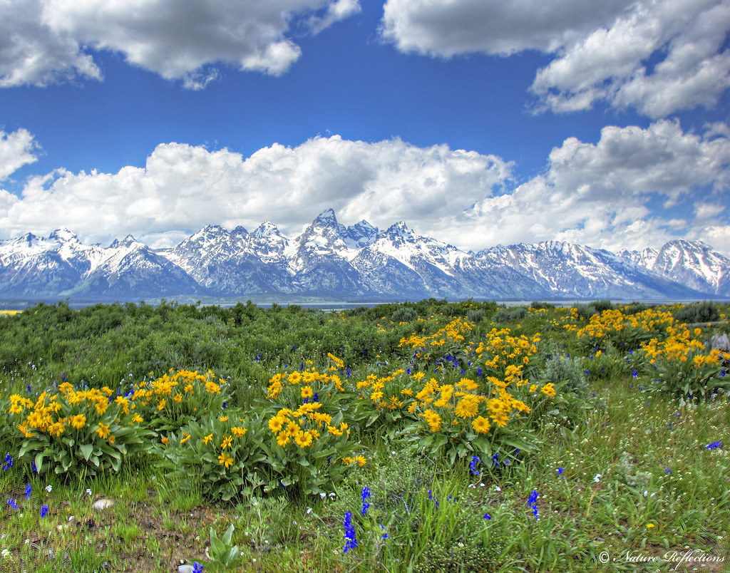 spring wildflowers in antelope - photo #1