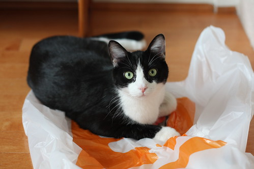 Oliver Laying on Plastic Bag | by Mr.TinDC