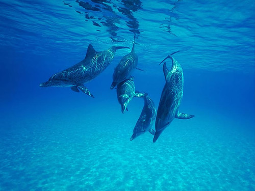 5 dolphins_Save_these_beautiful_creatures | by J. D. Ebberly