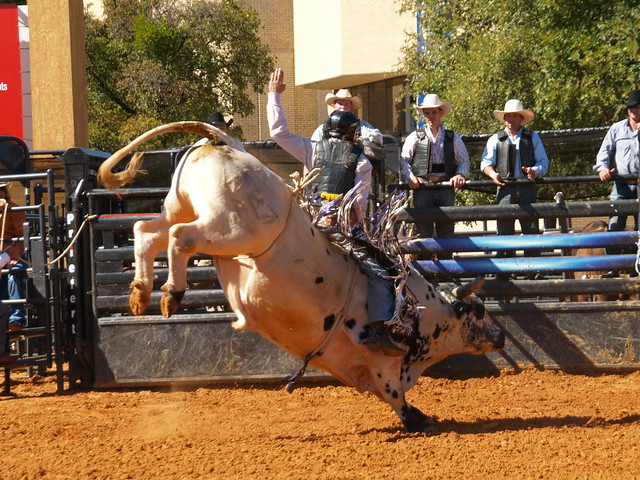 Interesting Facts About South Dakota – Mental Itch  |Texas State Sport Rodeo
