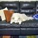Shiya Couch