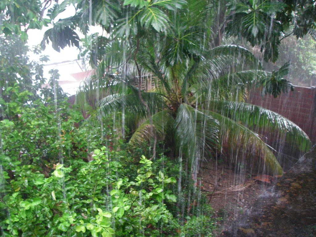 Island Trees School District V Pico Credible Website