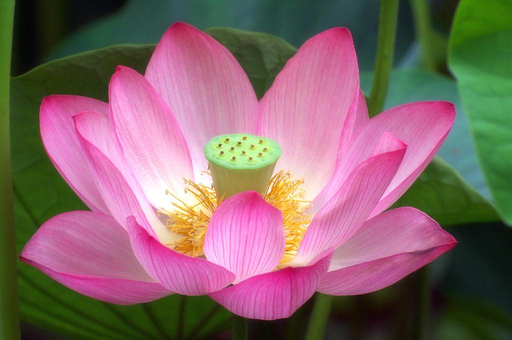 gratis  mobil lotus thaimassage