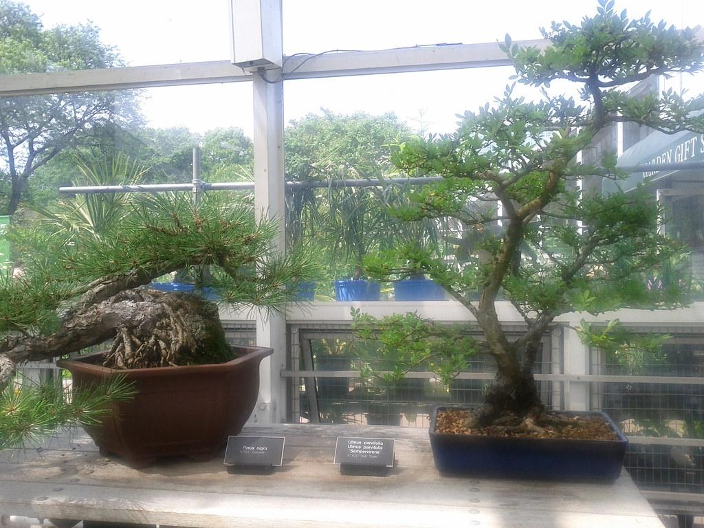 Brooklyn Botanical Garden I Visited The Brookyn Botanical Flickr