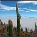 BOLIVIE Le salar d'Uyuni depuis l'isla de pescado