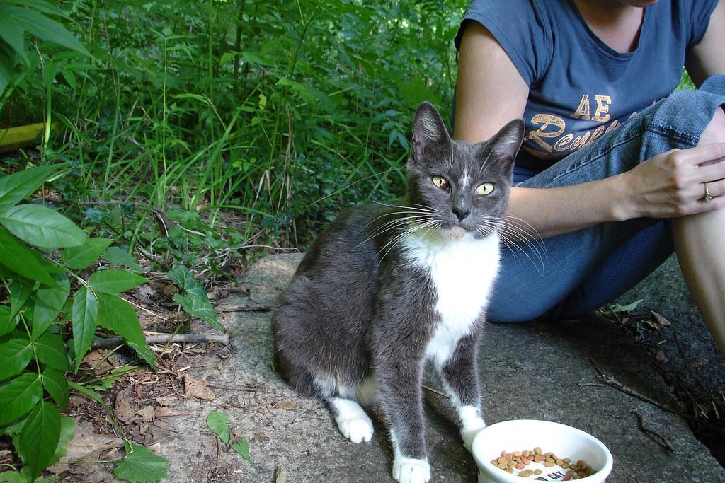 Smitten Kitten Cat Food