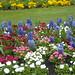 Spring in St Nicholas Park ...Warwick