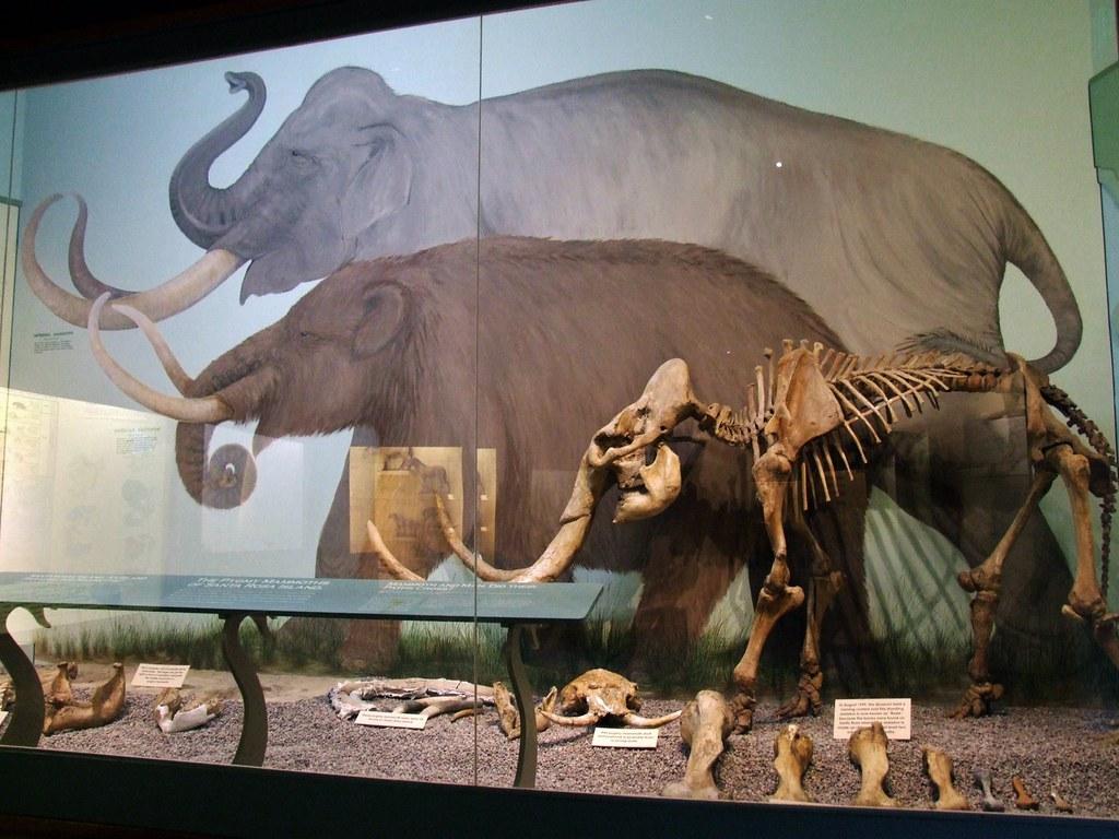 dwarf mammoth comparison