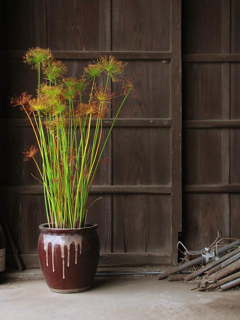 tokyo plant pots 101 東京植木鉢 the tokyo potted gardens papyru flickr