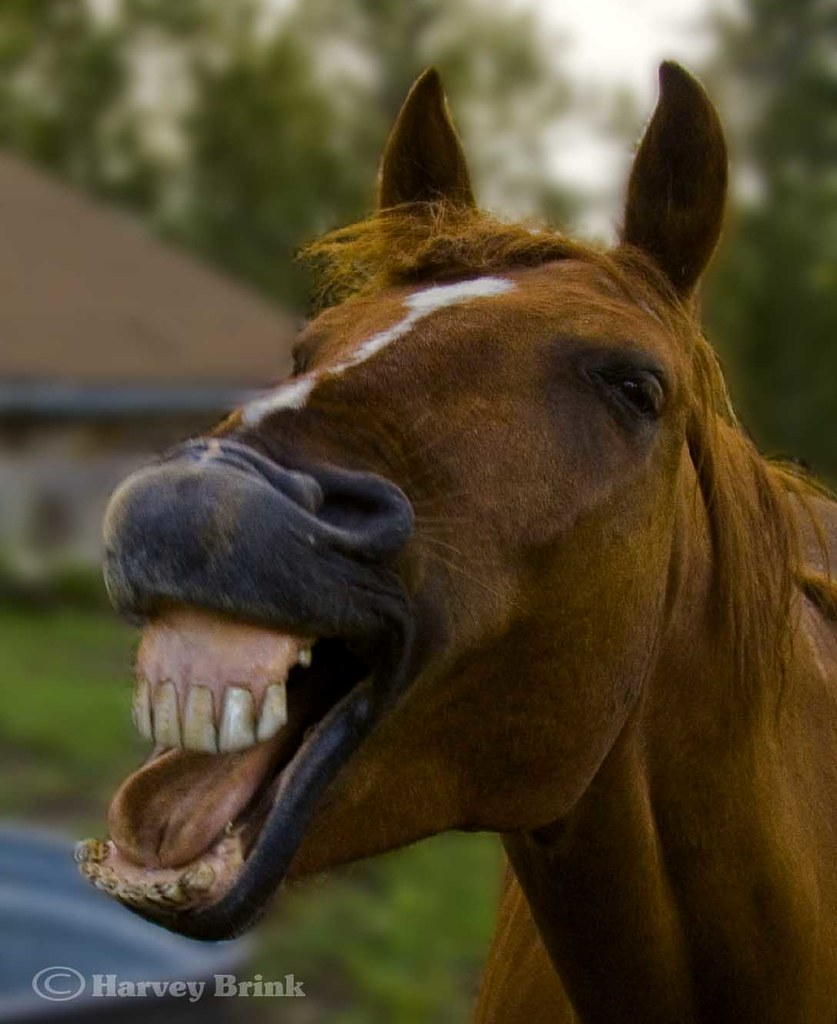 smiling horse occasionally for reasons unknown to me