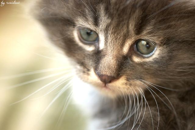 sad kitten eyes kittens are not mine im just a