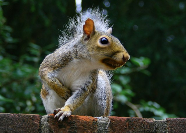 Angry squirrel | Angry squirrel - This little fella was ...