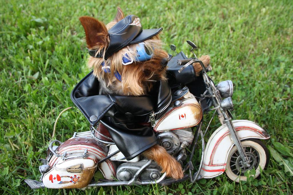 Harley Davidson Yorkshire Uk