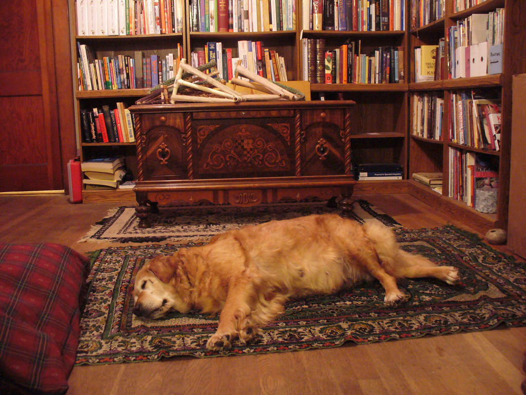 Taffy The Dog Sleeping In Library Dining Room As A
