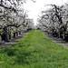 Orchard Aisle