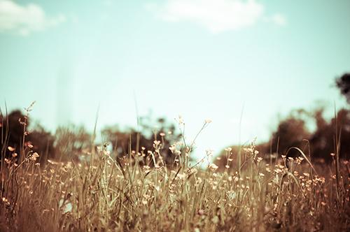 vintage flower | miliana. | Flickr
