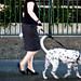 downtown dog walker