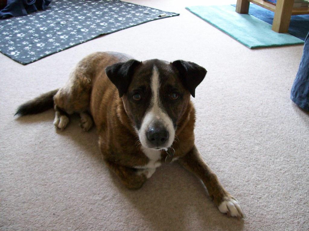 Dogs Trust Kenilworth Puppies