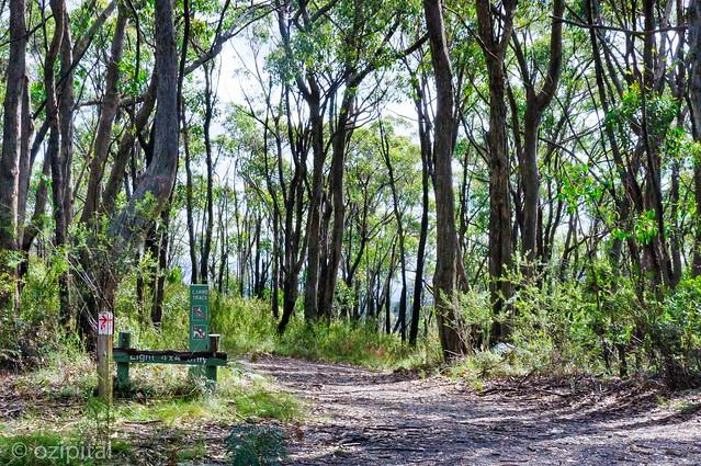 Mount Lofty Botanic Gardens Walk 19 Red On White Heysen
