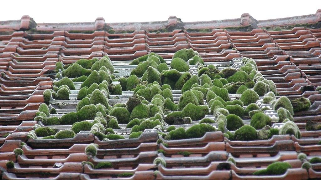 Petit Jardin Zen De Toit Zen Little Roof Garden C Est