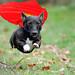 Superdog