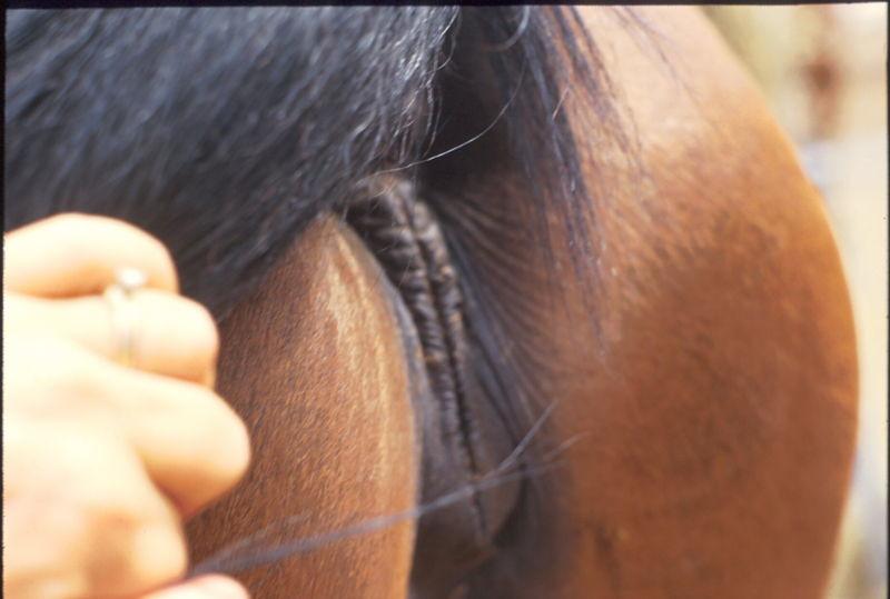 800Px-Vulva  Extensionhorses  Flickr-7461