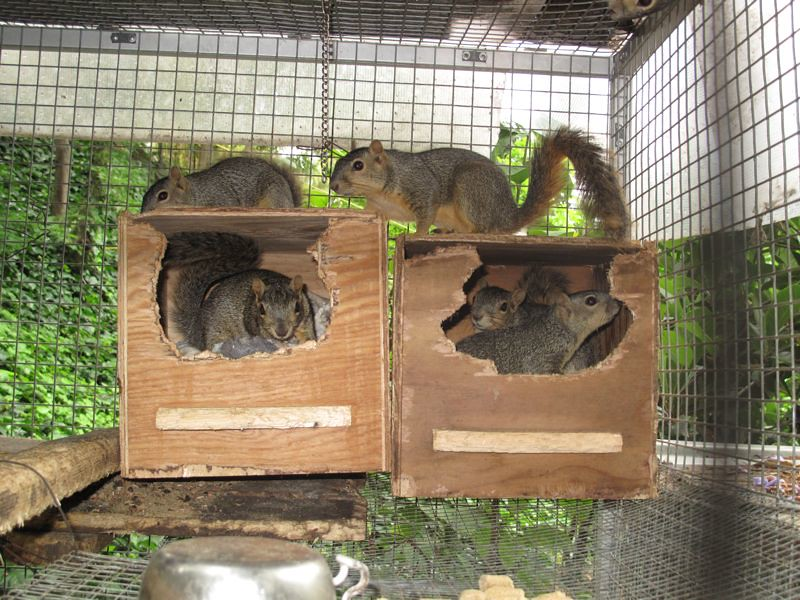 Repaired Squirrel House Animal Advocates Mary Cummins