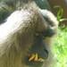 Anybody know a Good Dentist???......Happy Furry Friday Everybody...:O)))