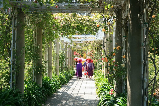 Huntington Library Art Collections And Botanical Gardens Rose Garden Flickr Photo Sharing