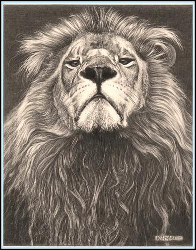 'Head of the Family' - Lion - Fine Art Pencil Drawings www ...