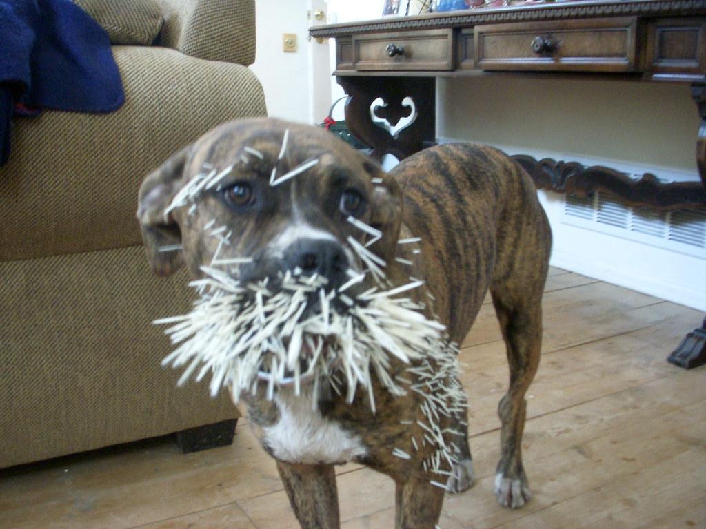 Dog Bite Dead Kennedys Cifra
