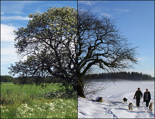 Summer vs. Winter | by Steffe