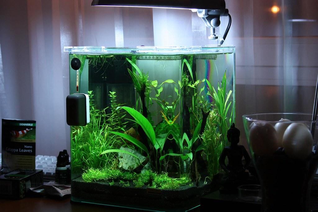 dennerle nano 20l aquarium my new dennerle nano 20l. Black Bedroom Furniture Sets. Home Design Ideas
