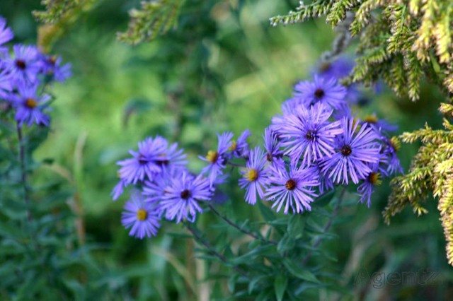 New York Wild Flowers | roadside wild flowers upstate New ...