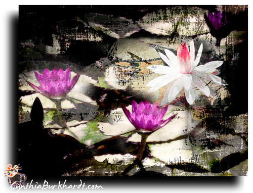 Lily Burk >> Water Lilies Layers of Textures | Water lily images captured… | Flickr