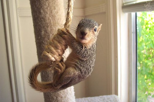 Baby Fox tree squirrel, Mary Cummins | Baby Fox tree ...