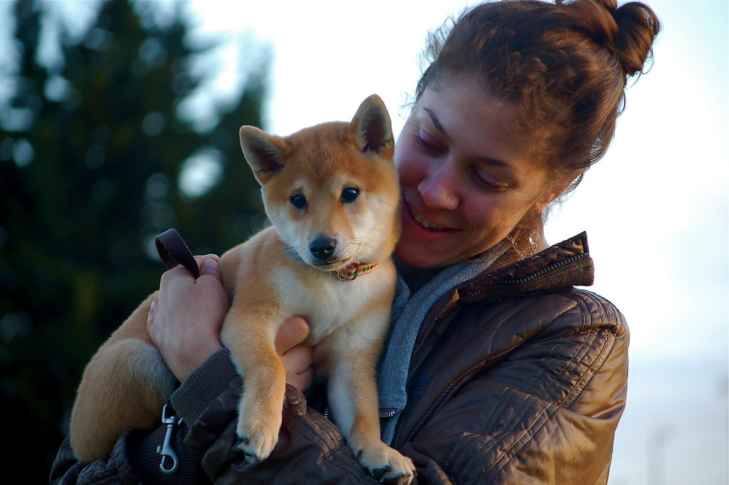 Shiba Inu Puppy | 3 months old | kewzoo | Flickr