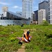 "Chicago Adapts For a Warmer, Wetter Future:  ""Green"" Roof on City Hall ..."