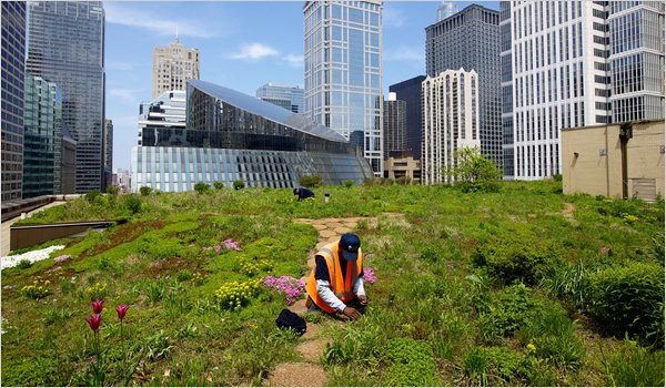Chicago Adapts For A Warmer Wetter Future Quot Green Quot Roof O