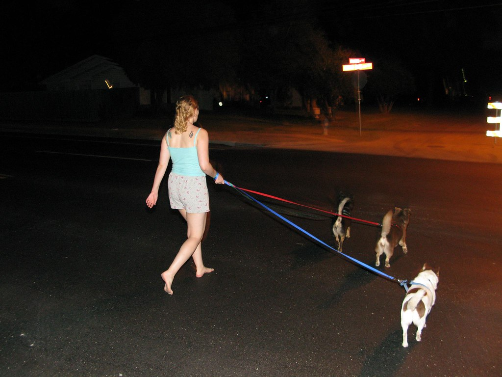 How To Walk Your Dog On A Hot Day