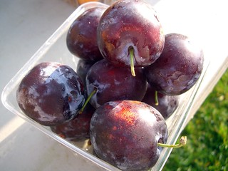 Italian Prune Plums | by swampkitty