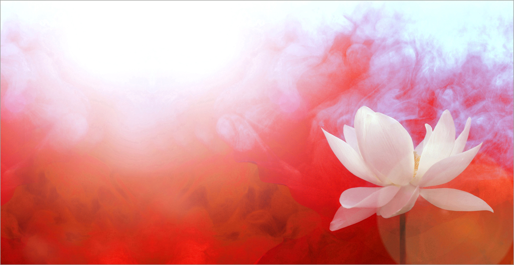 Lotus Flower with Red background / red /color red / red co ...