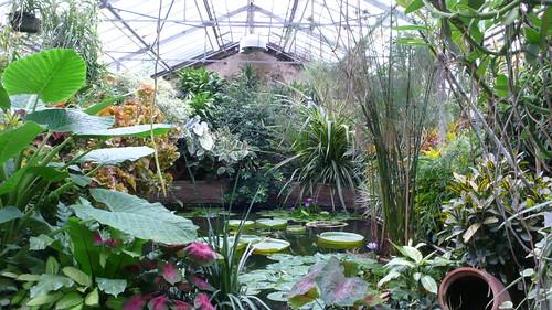 Rouen jardin des plantes serres tropicales la victoria for Jardin des plantes chambery