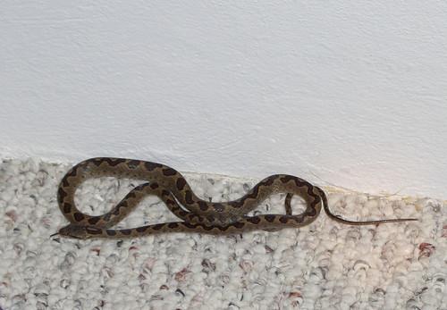 Snake In The Closet Trinidad Flickr Photo Sharing