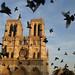 Flight, Notre Dame