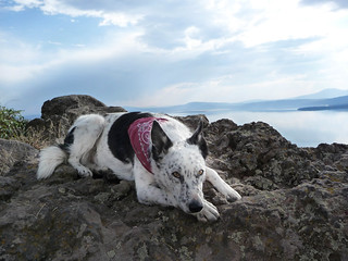 Ringo Above Klamath Lake | by ex_magician